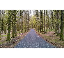 Beech forest Photographic Print