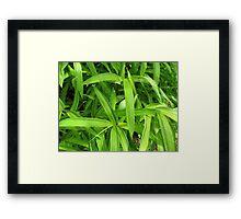 Green leaves Framed Print