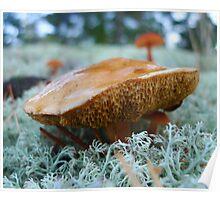 An interesting looking fungi Poster