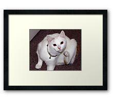 Scratching Cat Framed Print