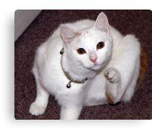 Scratching Cat Canvas Print