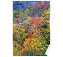 TREES,AUTUMN Poster