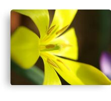 Yellow flower in Macro Canvas Print