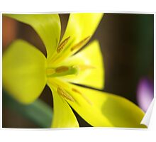 Yellow flower in Macro Poster