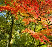 Vivid Autumn II by Chris Tarling