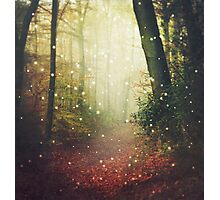Forest of Miracles and Wonder Photographic Print