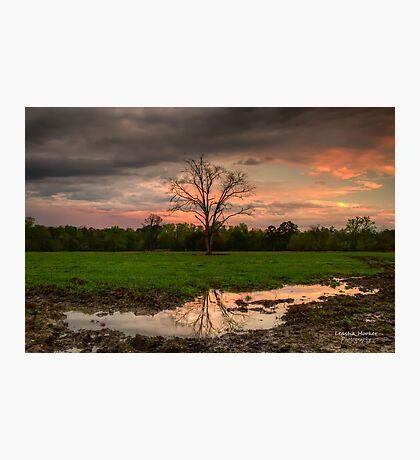 Mud Puddles Photographic Print