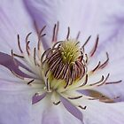 Clematis Flower II by Chris Tarling