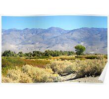 Desert meets Mountains Poster