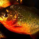 piranha by Stephen Frost