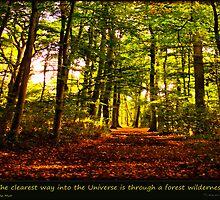 Forest wilderness by Yvon van der Wijk