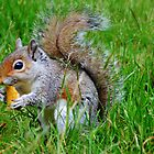 squirrel  by melek0197