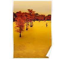 cypress trees on the bayou Poster