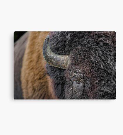 Bison up close Canvas Print