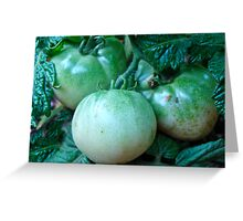 Green Tomatoes on the Vine Greeting Card