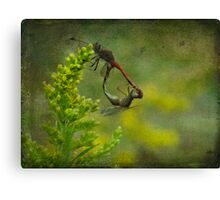 Dancing Dragons Canvas Print