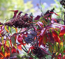 Colorful Fall Sumac by Galen Obermeyer