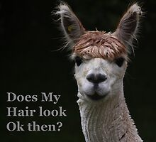 alpaca funny hair style by Tom Conway