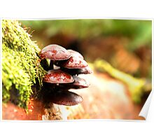 Otway fungi Poster