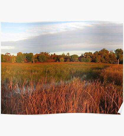 Fall Morning in Beaver Meadows Poster