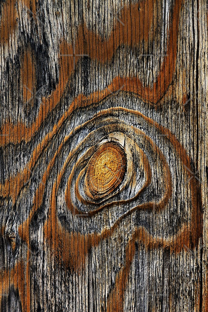 Wood knot .4 by Alex Preiss