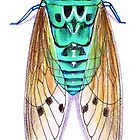 Teal Turquoise Cicada Zammara by Vicky Pratt