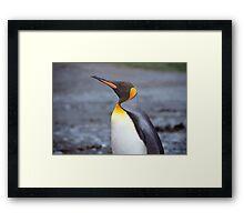 King Penguin Portrait Framed Print