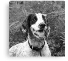 Dog portrait, spaniel in bracken Canvas Print