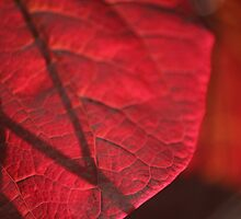 autum reds by Cliffyj