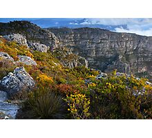 Top of Table Mountain Photographic Print