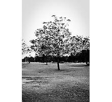 Solitutde Photographic Print