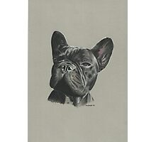 Diesel the beautiful French Bulldog Photographic Print