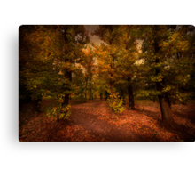 Shadows of Forest Canvas Print