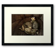 Yin, Yang and Meow Framed Print