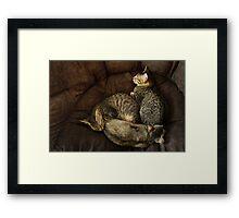 Yin, Yang and Meow Framed Print