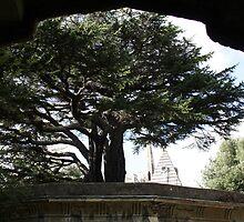 Highgate Cemetery cedar by TheLondonphile