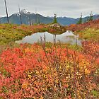Autumn in the High Country by Ron53