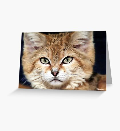 Arabian Sand Cat! Greeting Card