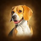 The Beagle by Lover1969