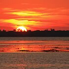 myakka sun set by cliffordc1