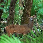 8 point buck by cliffordc1