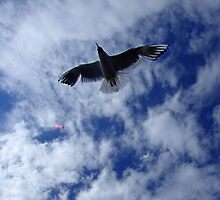 Seagull Flies Overhead by ChrisCopley