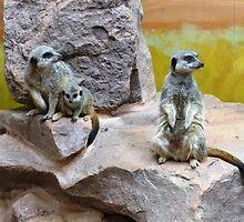 Mischievous Meerkats by klnhollis