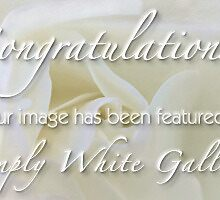 banner entry-Simply White Gallery by Celeste Mookherjee