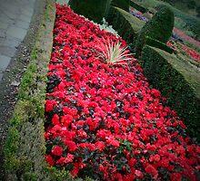 Gardens by Robert  Taylor