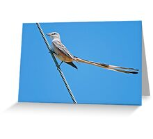 Scissor-tailed Flycatcher on High Wire Greeting Card