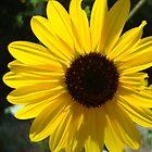 Sunflower by CADavis