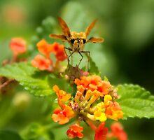 Itty Bitty Butterfly by BlackTopaz