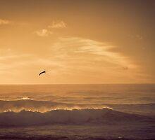 Paz by AnNina-