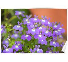 Pretty Purple Flowers Poster